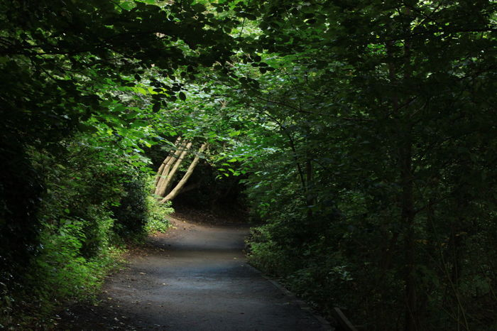 forest walks by the river Breathing Space Forest Walk Trees Beauty In Nature Forest Forest Way Growth Light And Shadow Nature Nature Path No People Outdoors Pathway Pathway In The Forest The Way Forward Walkway The Week On EyeEm