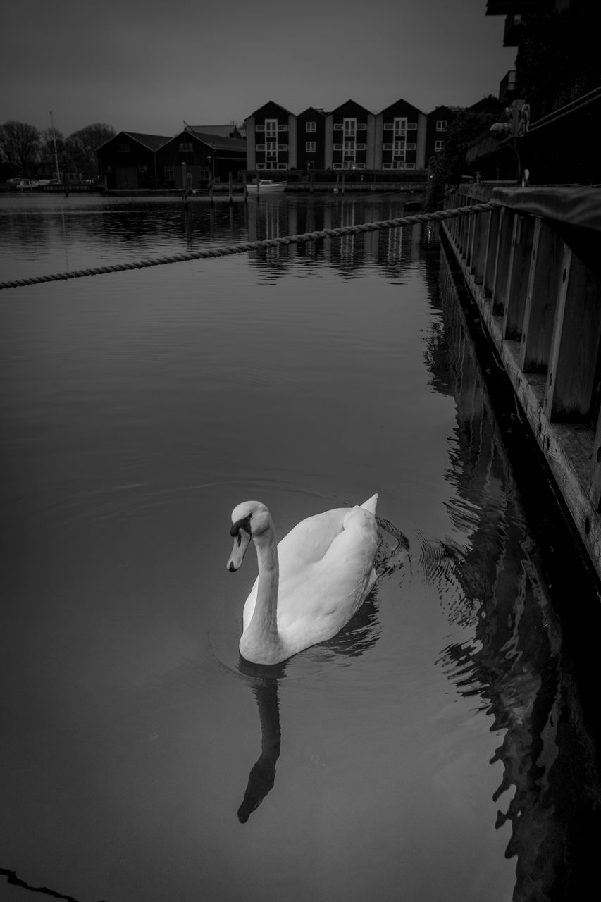 bird, animal themes, animals in the wild, one animal, water, lake, architecture, outdoors, building exterior, nature, swan, no people, day, water bird, city, sky, perching