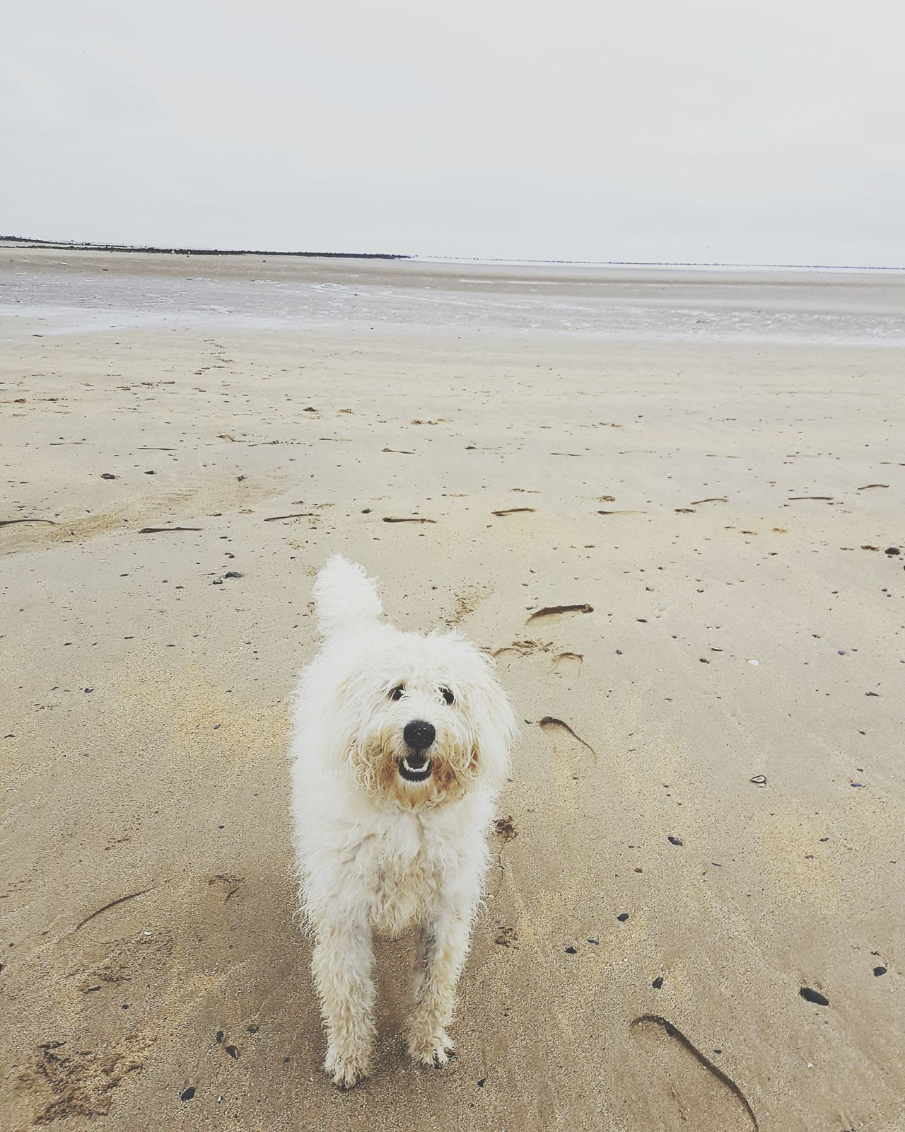 Beach Sea Sand Nature One Animal Dog Horizon Over Waterq Animal Themes Sky No People Outdoors Domestic Animals Day Fresh Peaceful View Peaceful Moment Relaxing Moments Fresh Air Sea And Sky Peace And Quiet Dog On Beach Northwales Water Cloud - Sky Smile Chill