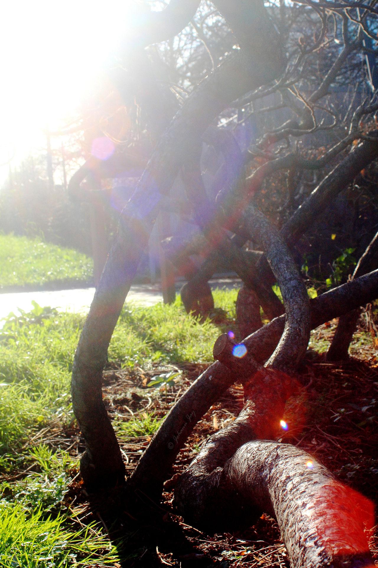 ArbreDeVie Automn Colors Beautiful Nature Enchevêtrement Jeu De Lumiere Jeu De Soleil Light Nature étrange Ombres Et Lumières Tree Branches