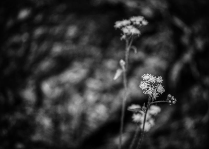 Flowers Flowers,Plants & Garden Black And White Your Ad Goes Here EyeEm Nature Lover White Flowers