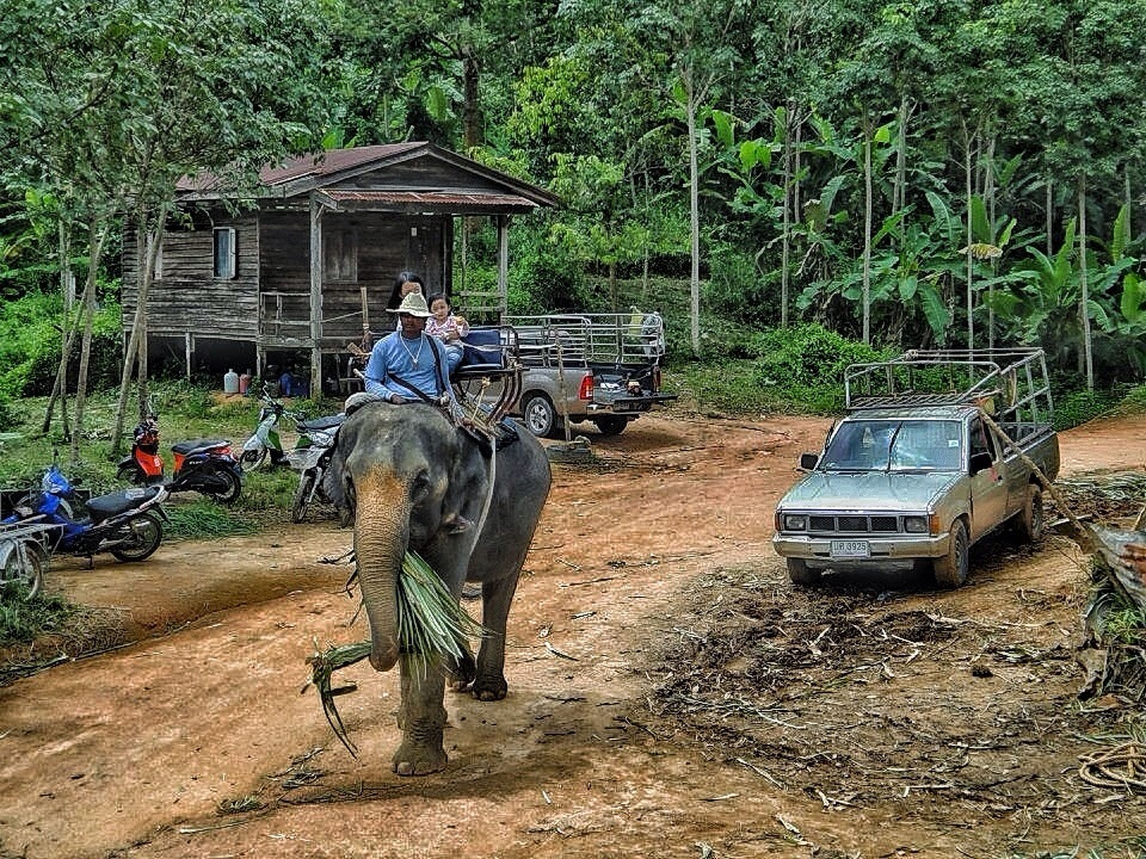 full length, men, tree, lifestyles, land vehicle, transportation, leisure activity, mode of transport, rear view, walking, casual clothing, horse, mammal, riding, domestic animals, person, working animal