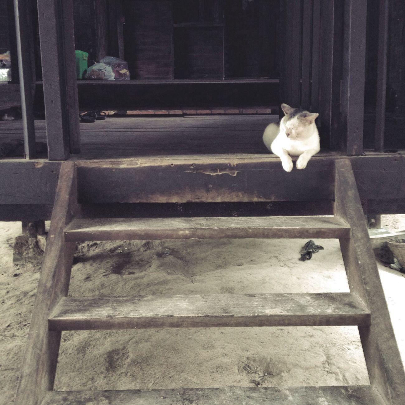 Pet Cat Sleeping Myanmar