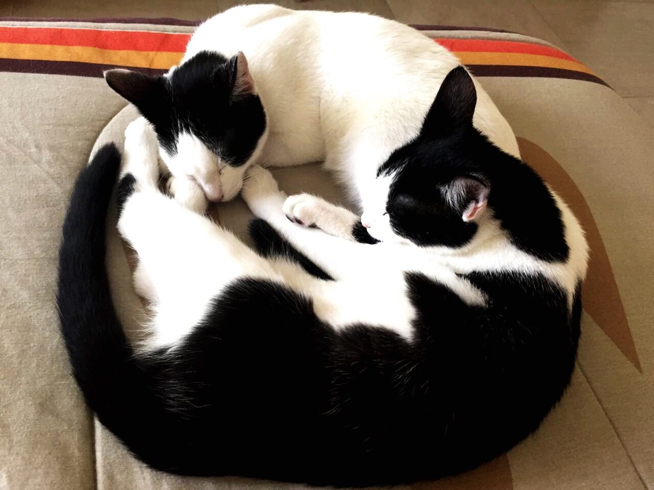 pets, domestic animals, mammal, dog, sleeping, animal themes, high angle view, relaxation, black color, no people, indoors, day