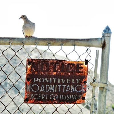 Rural Signage at Guard Dove on Duty! by Lilbullits
