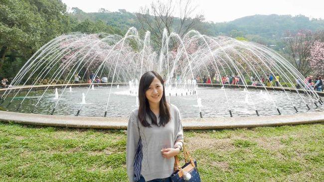 Yang Ming Shan  Sakura Blossom