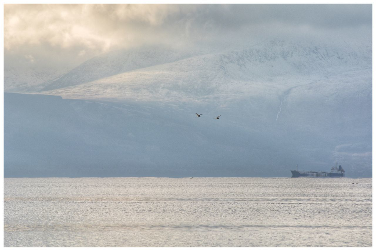 Ducks fly past snow-capped and cloudy Isle of Arran - series Flying Nature Tranquil Scene Beauty In Nature Scenics Tranquility Landscape Day Outdoors No People Animal Themes Sky Bird Animals In The Wild (null)Winter Mountains Isle Of Arran  EyeEm Arran  Eye4photography  EyeEmBestPics Bird Photography EyeEm Gallery Ducks 🦆