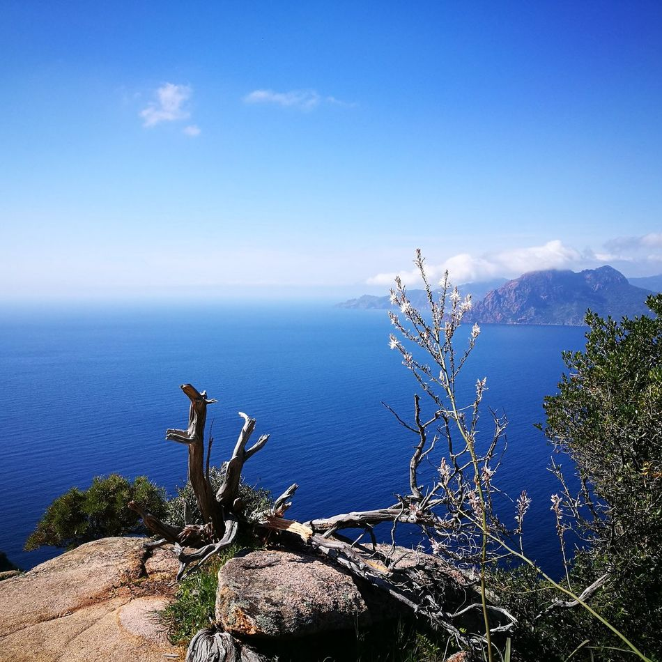 Water Sea Nature Day Outdoors Blue Sky Beauty In Nature No People Picture Of The Day Beach Corse Plant Flower