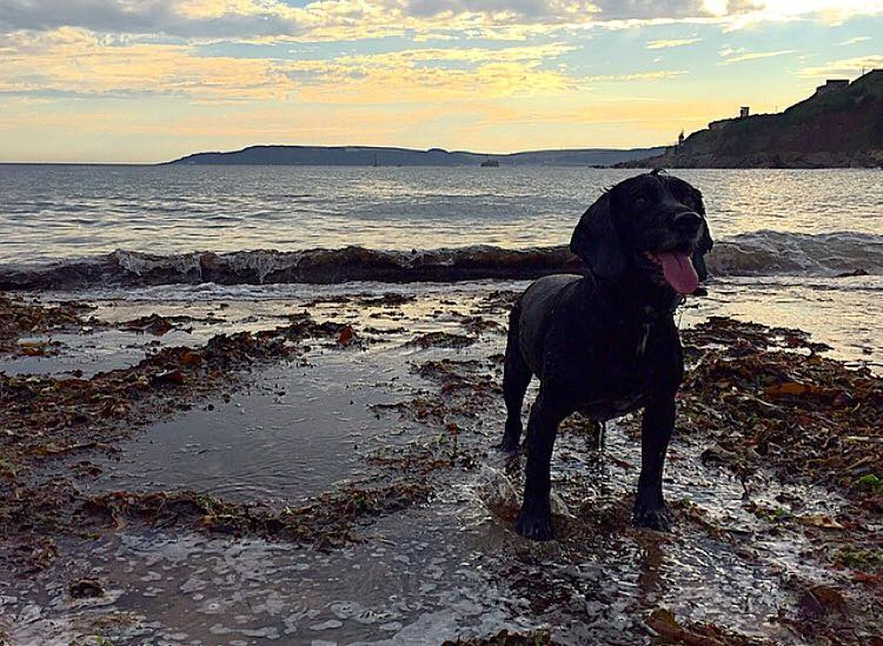Beach Cold Dog Freddie Sand Sea Sea And Sky Seaweed Seaweed At The Beach Spaniel Sprocker Sunset View Waves