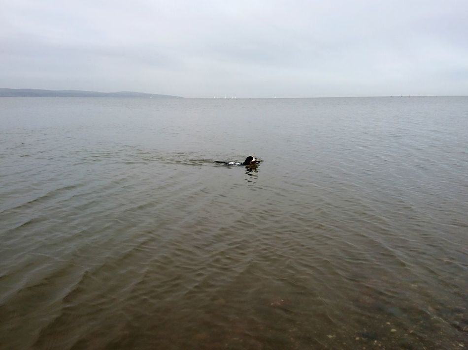 Swimming Swimming Cavalier King Charles Spaniel Thurstaston Beach River Dee  Wirral Scenics Sky Landscape Sea Tranquil Scene Day Beauty In Nature No People Horizon Over Water Tranquility Water Cloud - Sky Sunbeam Dramatic Sky Beach Outdoors