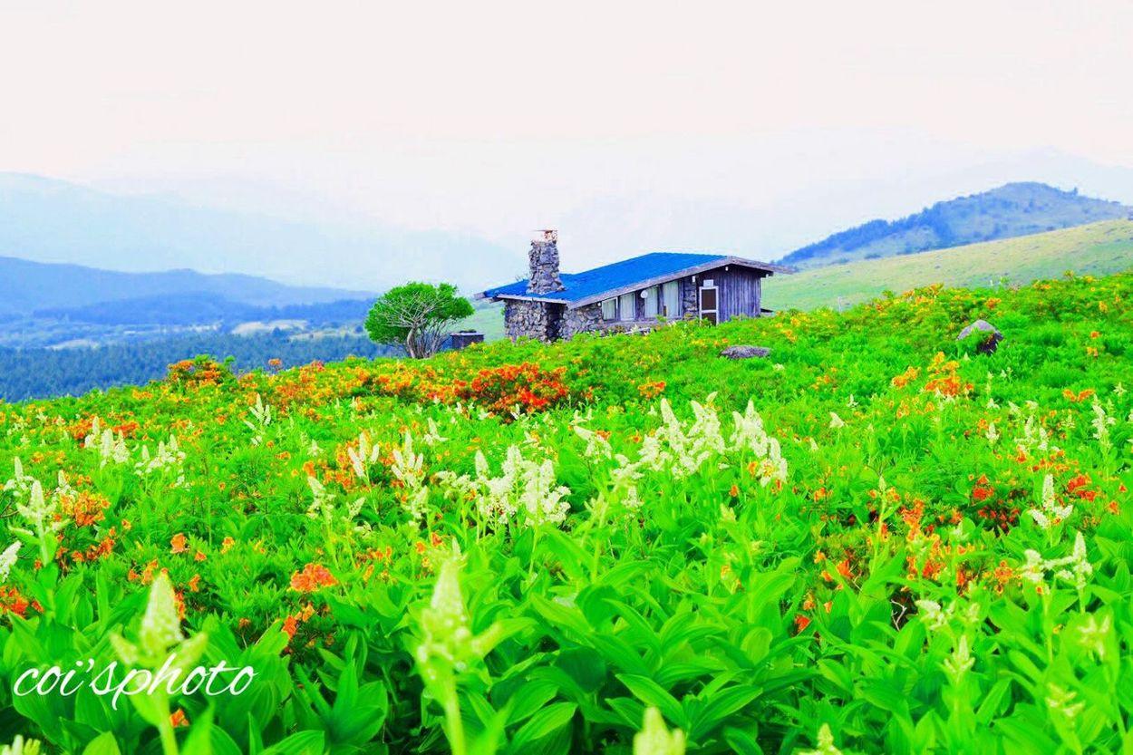 新緑の霧ヶ峰高原。こんなに緑が豊かなりました。やっぱり何度きても気持ちいい! Memories 車山高原 霧ヶ峰高原 Japan Emeyebestshot Traveling Beautiful Nature
