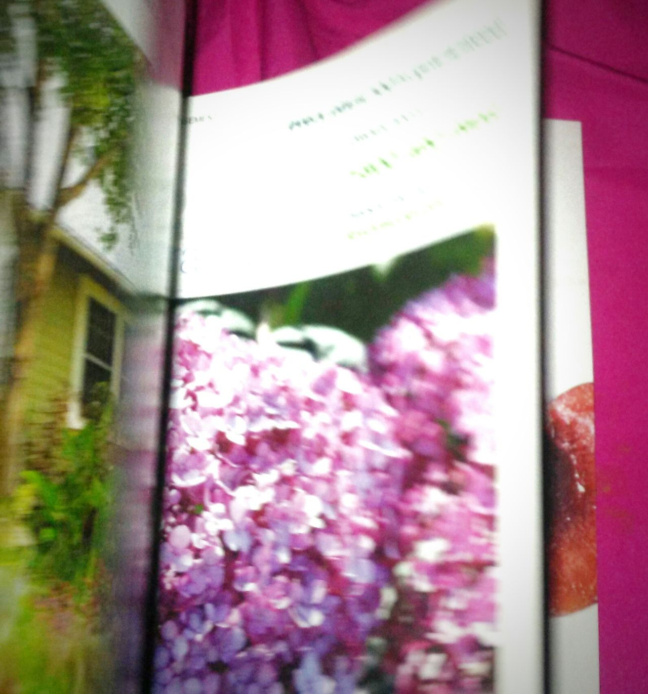 Happy Memorial Day! Flower Pink Color Window Purple Day Close-up No People Growth Outdoors Architecture Building Exterior Nature Fragility Freshness Eyem Best Shots The Great Outdoors - 2017 EyeEm Awards