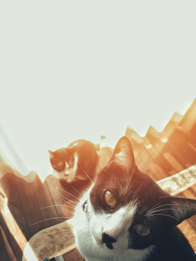 Cat Cute Pets Relaxing IPhoneography Home Cheese! Check This Out Eyem Best Shots Animals