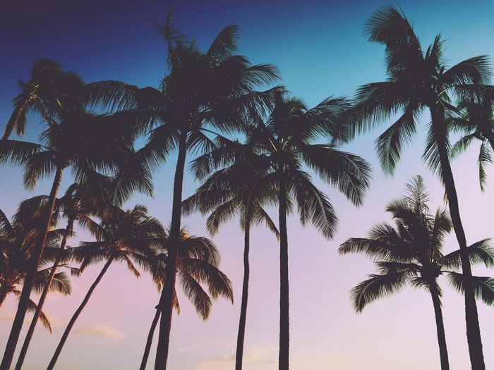 Palm Trees Check This Out Hello World Taking Photos Enjoying Life Traveling Art Landscape Photography Taking Photos Photoshoot Travel Photography Palmtree Clay Hayner Photo ClayHaynerPhoto Travel And Leisure Travelphotography Photooftheday Beach Life Travel Destinations Hawaii Love My Job Sunset Live For The Story