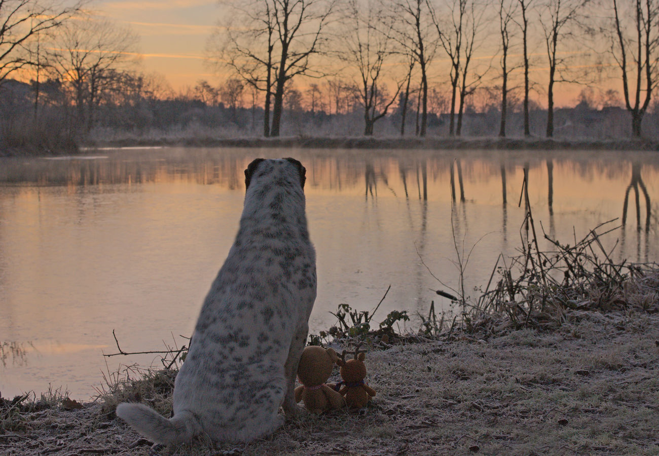 Water Reflection Lake Sunset Sonnenuntergang Teddy Tree Nature Outdoors No People Beauty In Nature Day Sky Hannover, Germany Braunschweig Wolfsburg Winsen Celle Dog Photography Hundefotografie Animal Dog Hund Pets Shar Pei