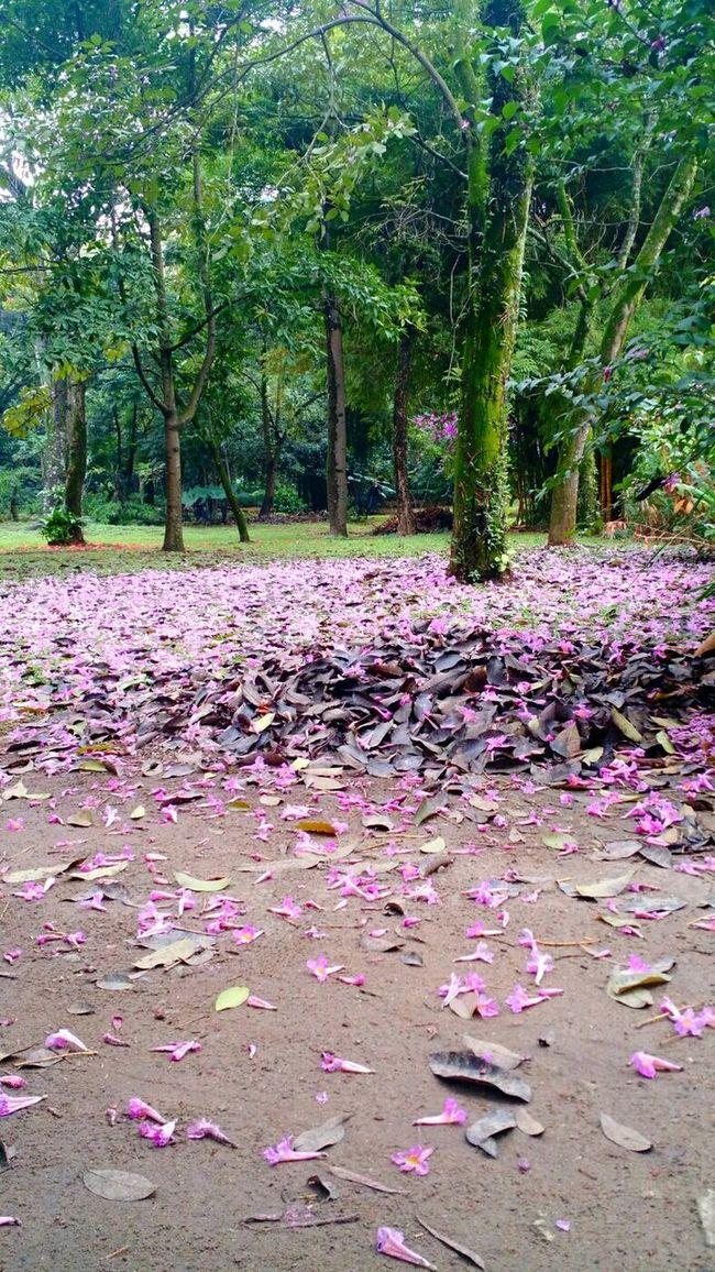 Flores Flowers Beautiful Nature Naturelovers Piqueri Volta Do Almoco Rolê Saudetotal volta do almoco rendeu boas fotos.