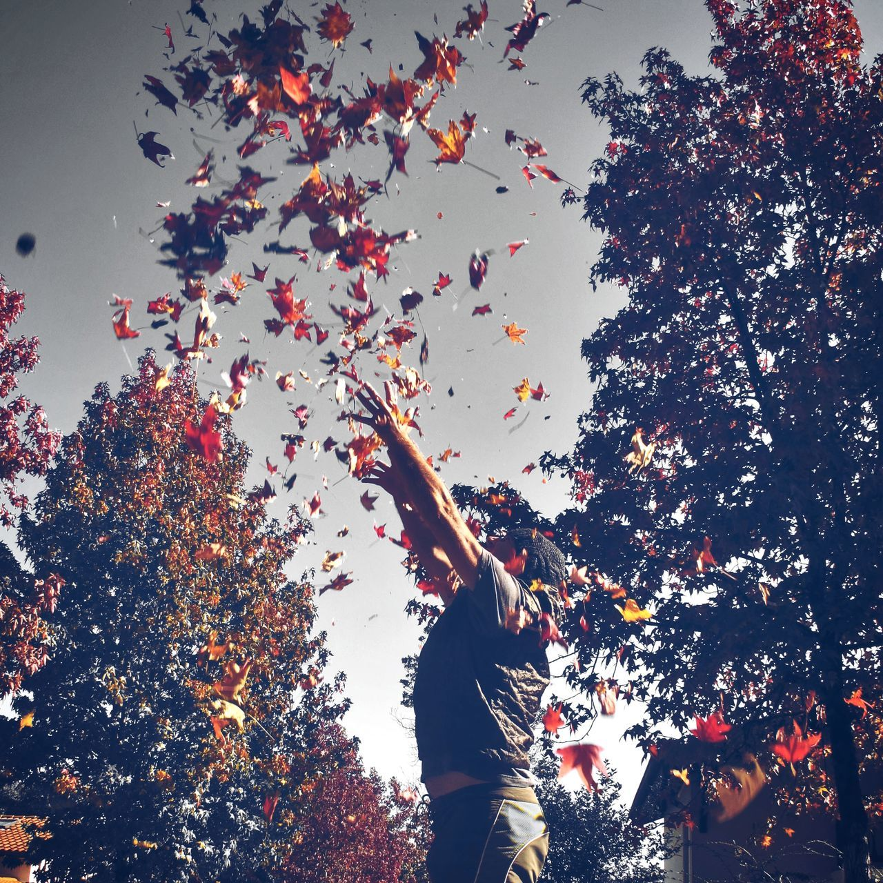 Playful leafs Totally Worth It Color Splash EyeEm Best Shots AMPt Community