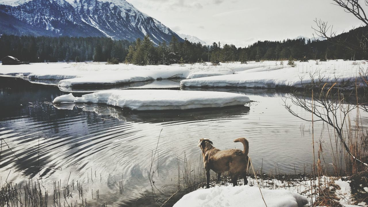 Hanging Out Taking Photos Enjoying Life Sony A6000 Naturfotografie Nature_collection Naturlover Waterreflections  Eye4photography  Silence Mountain_collection Wintertime Winter Wonderland Snow Heidsee Switzerland Dog DogLove The Great Outdoors - 2016 EyeEm Awards