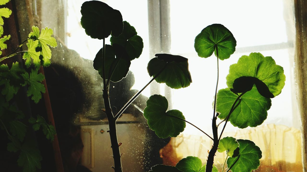 Window Plant Silhouette Indoors  Water Nature Adult Leaf Adults Only Day Close-up Men One Person People Low Angle View Frond Indoors  EyeEm Russia Tree Freshness Branch Beauty In Nature Sunlight No People