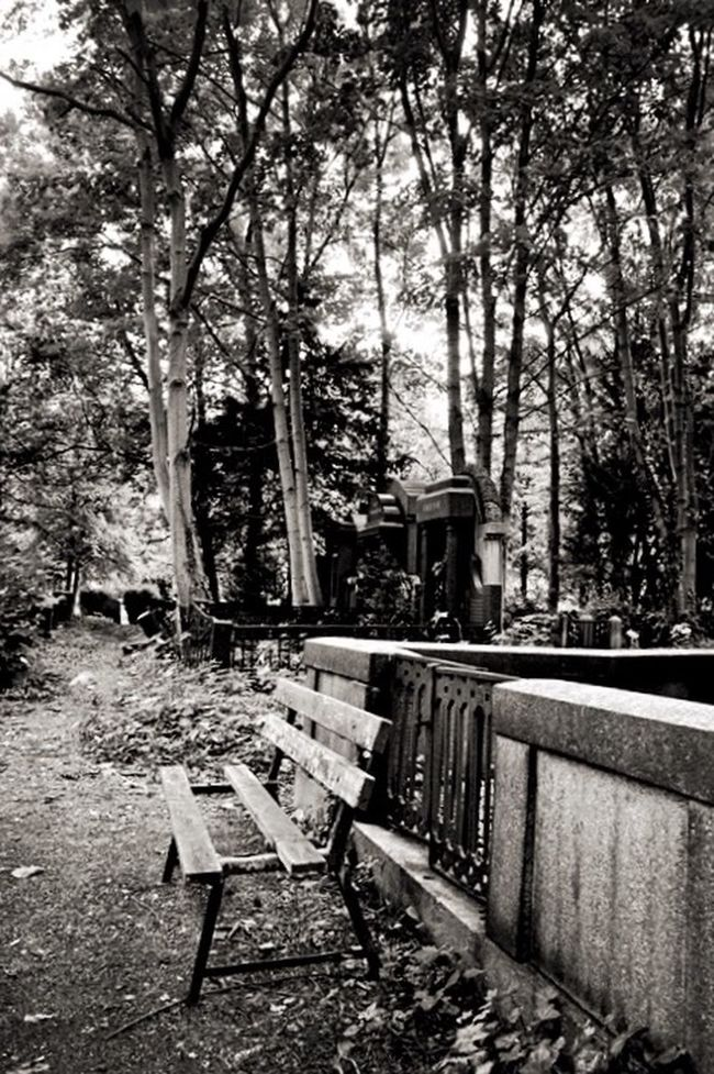 Quiet morning on the Graveyard Graveyard Beauty Friedhof Cemetery Blackandwhite Black And White Black & White Monochrome