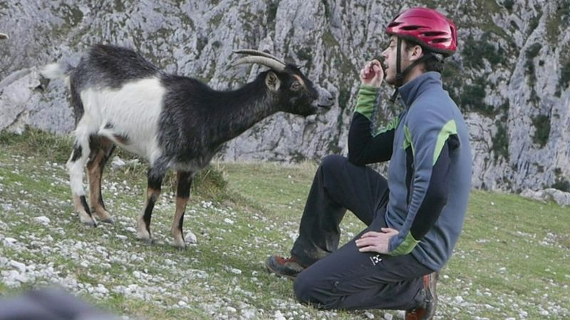 Mountains Picos De Europa Goat Wildlife Contact Playing With The Animals Taking Photos Panasonic Lx100 Lx100 The Great Outdoors - 2016 EyeEm Awards Pet Portraits