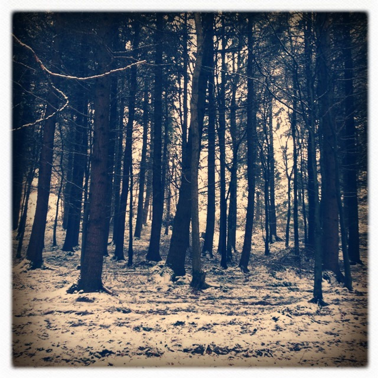 tree, nature, forest, tree trunk, no people, landscape, outdoors, snow, winter, beauty in nature, day