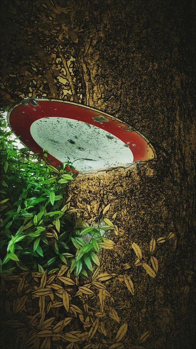 baum schild Art Taking Photos Ohneworte Fotografie Handyshot Outdoor Pictures Outdoors Photograpghy  Crazy Abgedreht Handymake Holz Kunst