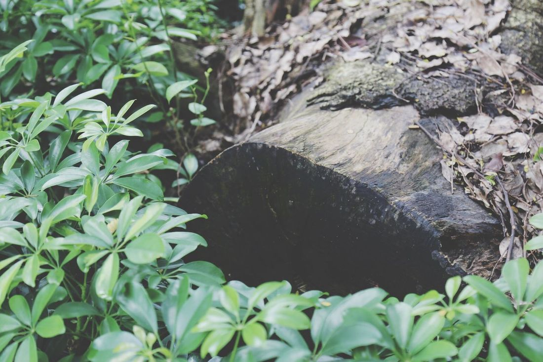 Died tree Died Tree