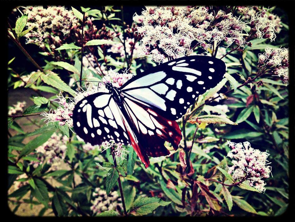 Butterfly Flowers Temple Japanese Garden