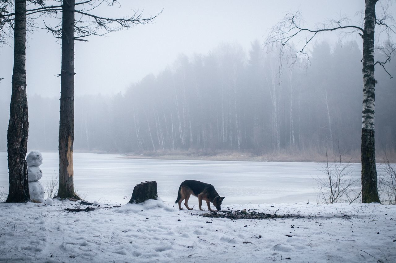 Beautiful stock photos of german shepherd, Animal Themes, Beauty In Nature, Cold Temperature, Day