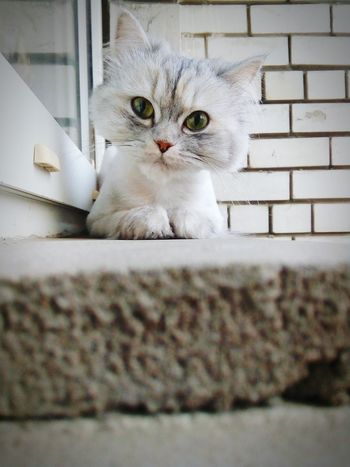 Cat My Like Cat Монечка Моя кошка Animal моя любовь самаялюбимая самаялучшая Россия Pet Portraits