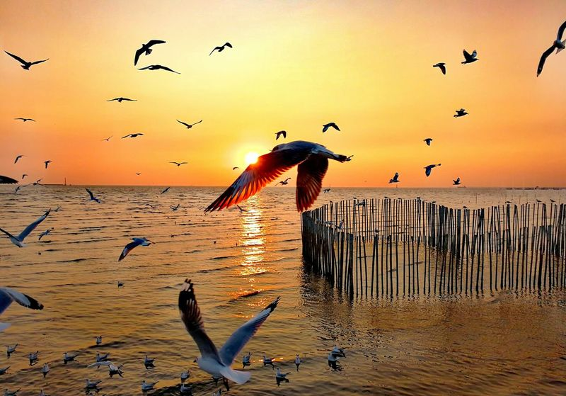Animal Themes Thailand🇹🇭 Samutbakan 2017 Flock Of Birds Spread Wings Colony Beauty In Nature Sunset EyeEm Selects BestofEyeEm Animals In The Wild Silhouette Trending Now Water No People Eye4photography  Travel Destinations Tranquil Scene Outdoors Nature Flying Animals In The Wild Bird Nature