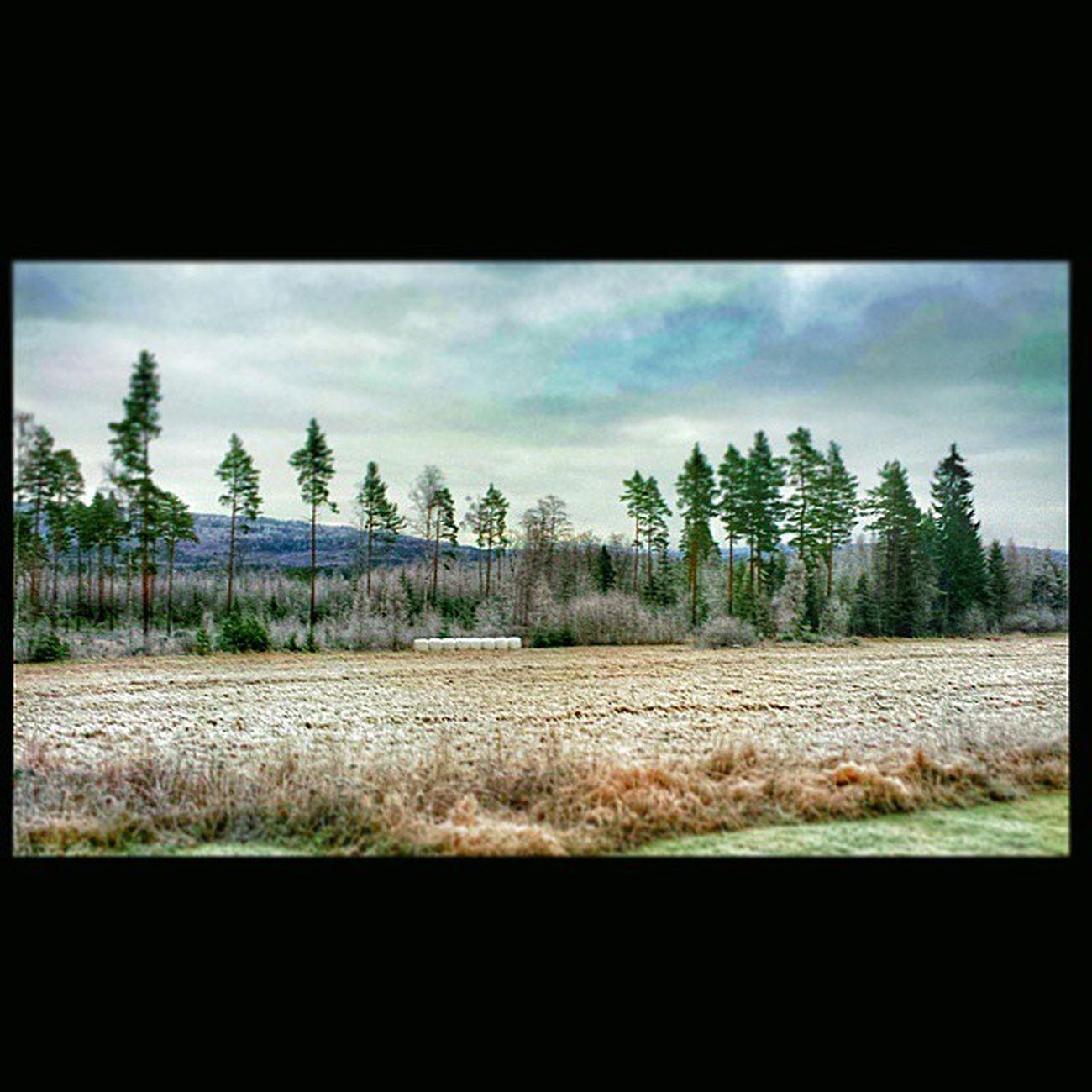 Aker åkrar Nature Natur Dalarna Leksand Hjortnäs