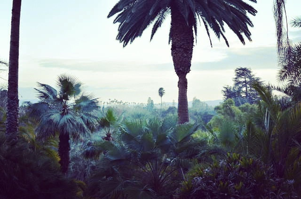 palm tree, tree, nature, growth, tranquility, beauty in nature, no people, plant, scenics, tree trunk, outdoors, day, sky, close-up