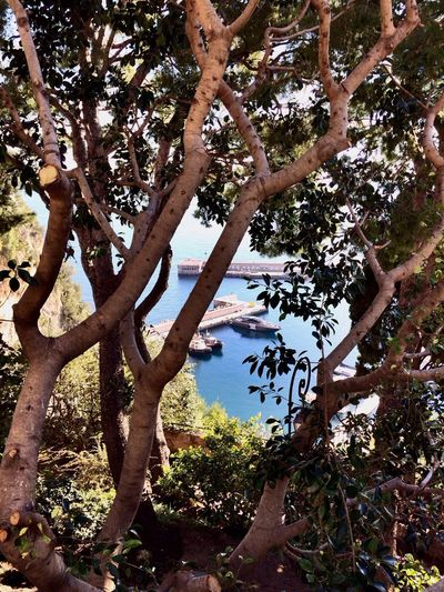 Hugging A Tree Enjoying The Sun Enjoying Life Hanging Out