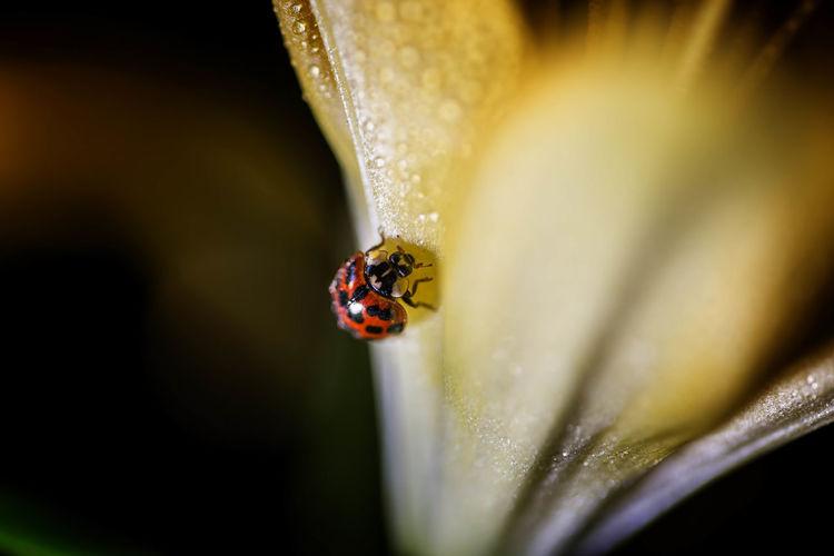 Animal Themes Animal Wildlife Animals In The Wild Close-up Day Insect Ladybug Ladybug Macro Nature No People One Animal Outdoors