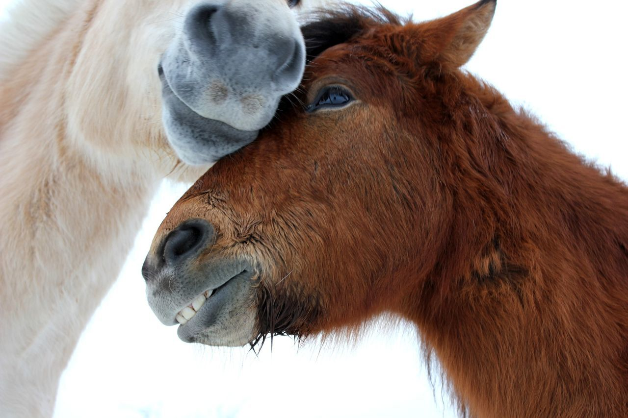 Beautiful stock photos of horse, Affection, Animals, Beginnings, Care