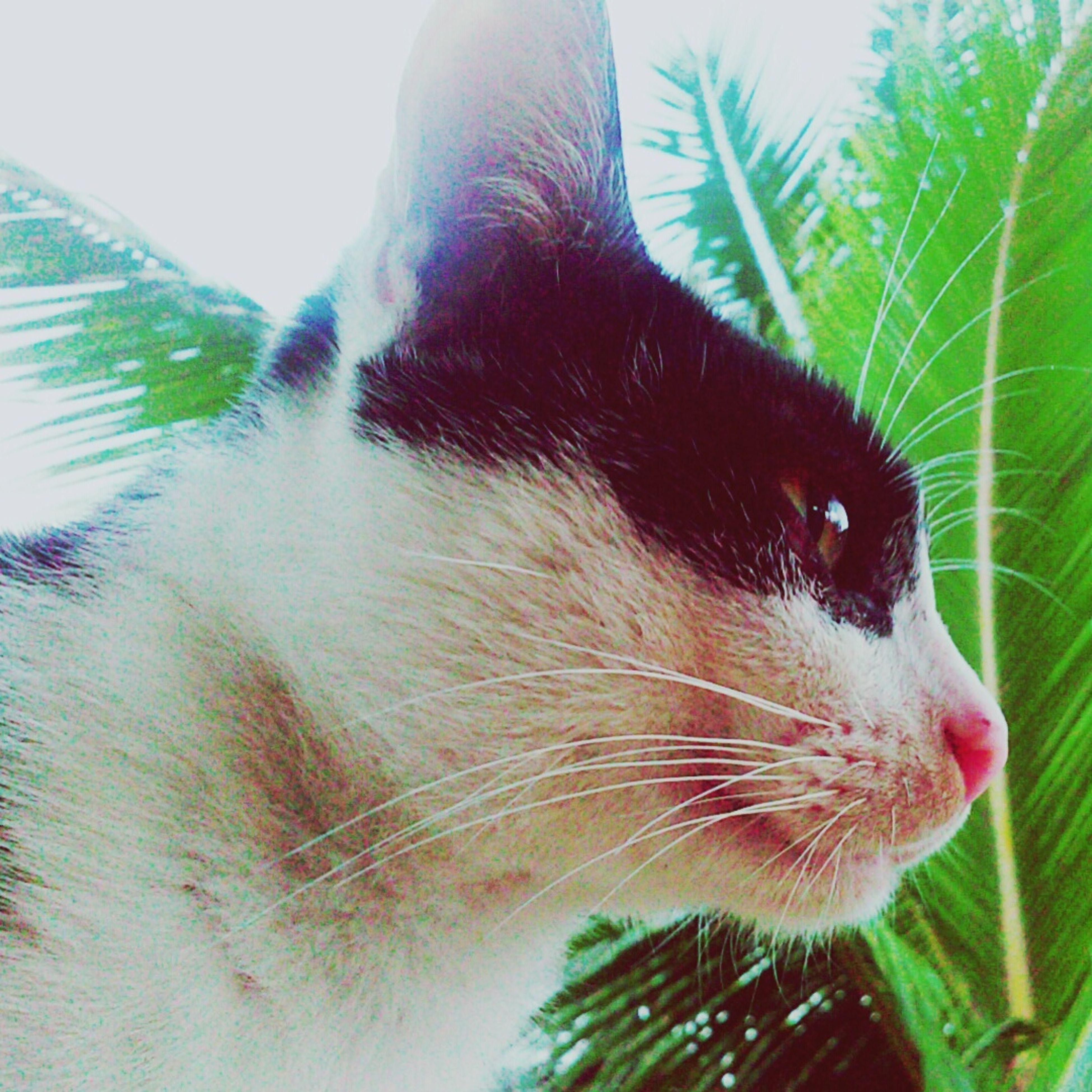 one animal, animal themes, close-up, pets, mammal, domestic animals, animal head, part of, focus on foreground, nature, domestic cat, animal body part, green color, growth, day, plant, cat, leaf, cropped, outdoors