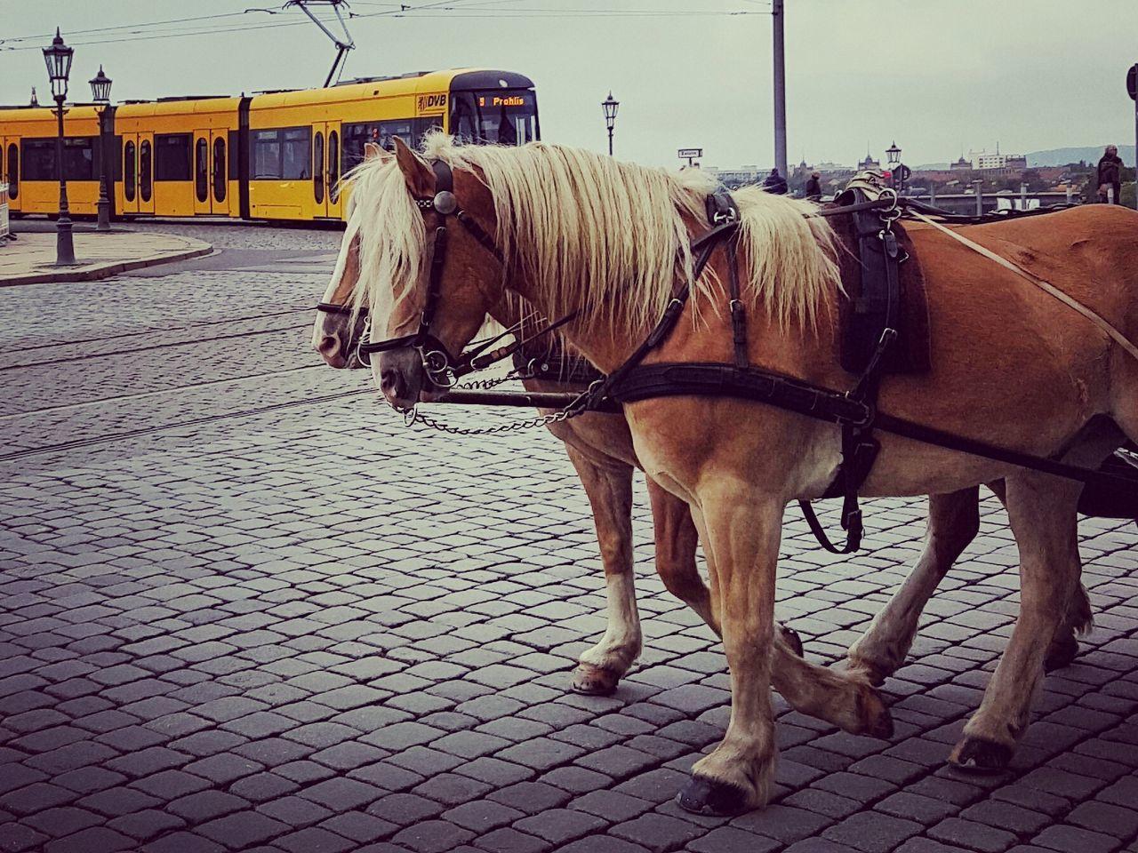 Animal Themes Bremen Day Horse Horses No People Pferd Tram Working Animal First Eyeem Photo