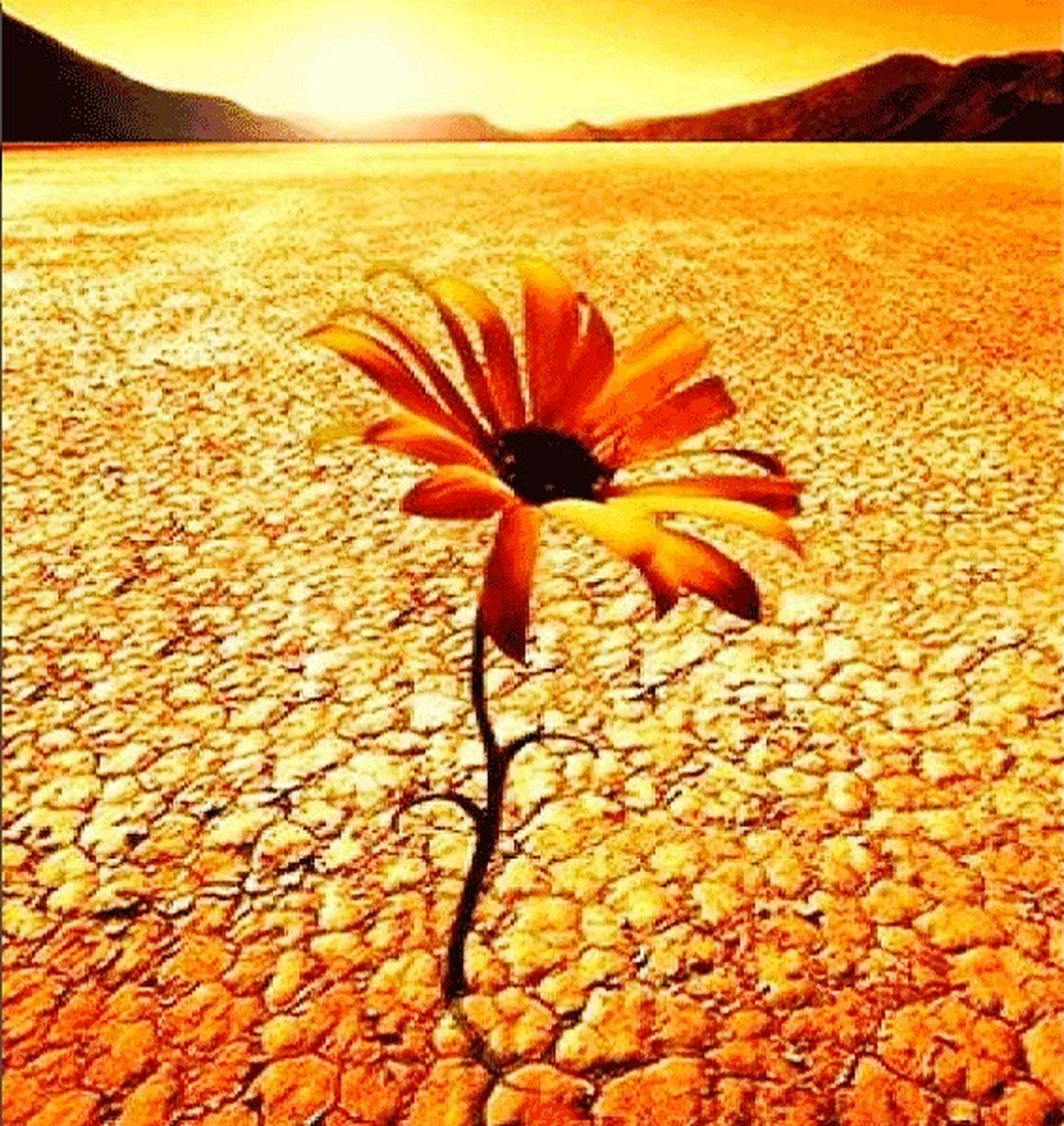 flower, petal, fragility, flower head, orange color, beauty in nature, nature, freshness, yellow, sunset, growth, blooming, plant, sunlight, leaf, field, single flower, outdoors, no people, tranquility