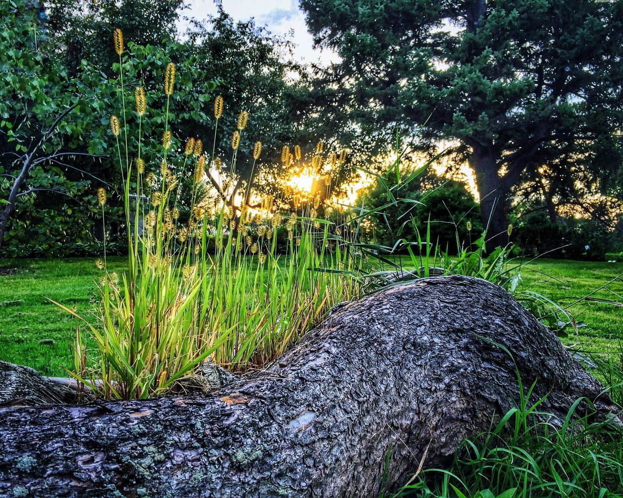 Whittier Minneapolis Minnesota Tree Trunk Fallen Tree Outdoors Urbanphotography Enjoying Life Urban Landscape Urbanscape Afternoon Blues Summertime Urban Nature Tall Grass Urban Photography EyeEm Best Shots Urban Lifestyle