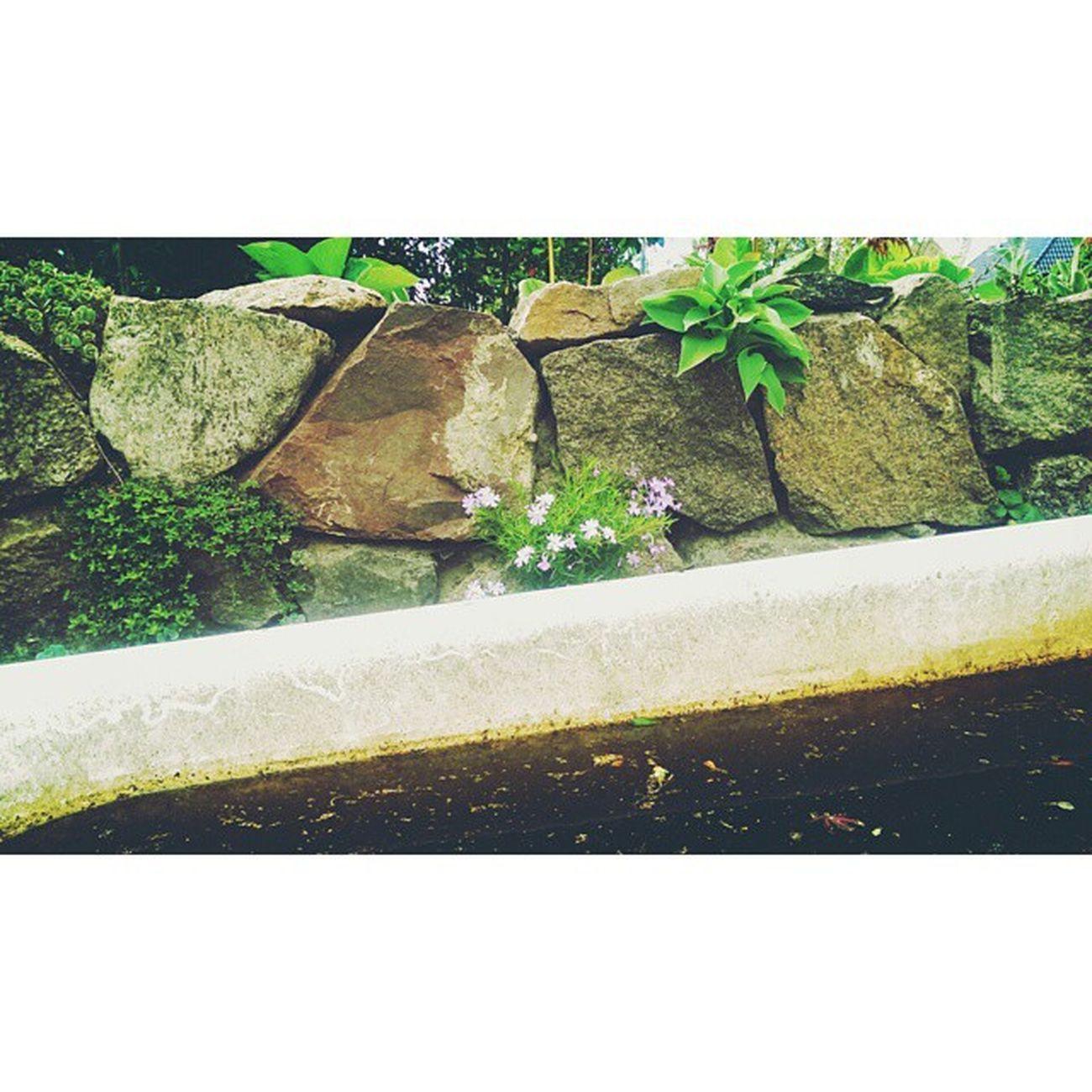 Gardening Part 2 Stones Gewächs Greenthings Und Ne Badewanne Ekelwasser Moddderbad Flowerporn Floweroftheday Outside Photographie  Insta Instagood Nurdiehartenkommingartendochmartenmussvordemgartenwarten Justgoshoot