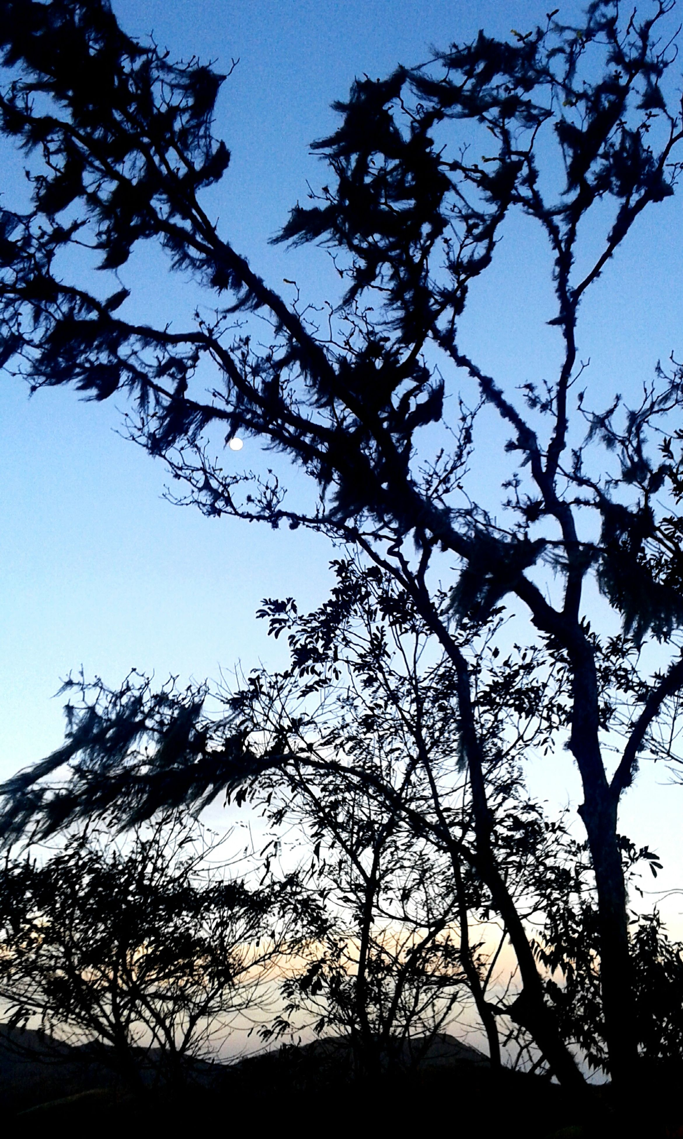 low angle view, tree, branch, silhouette, sky, bare tree, clear sky, nature, built structure, growth, beauty in nature, architecture, tranquility, sunlight, building exterior, blue, outdoors, no people, high section, scenics