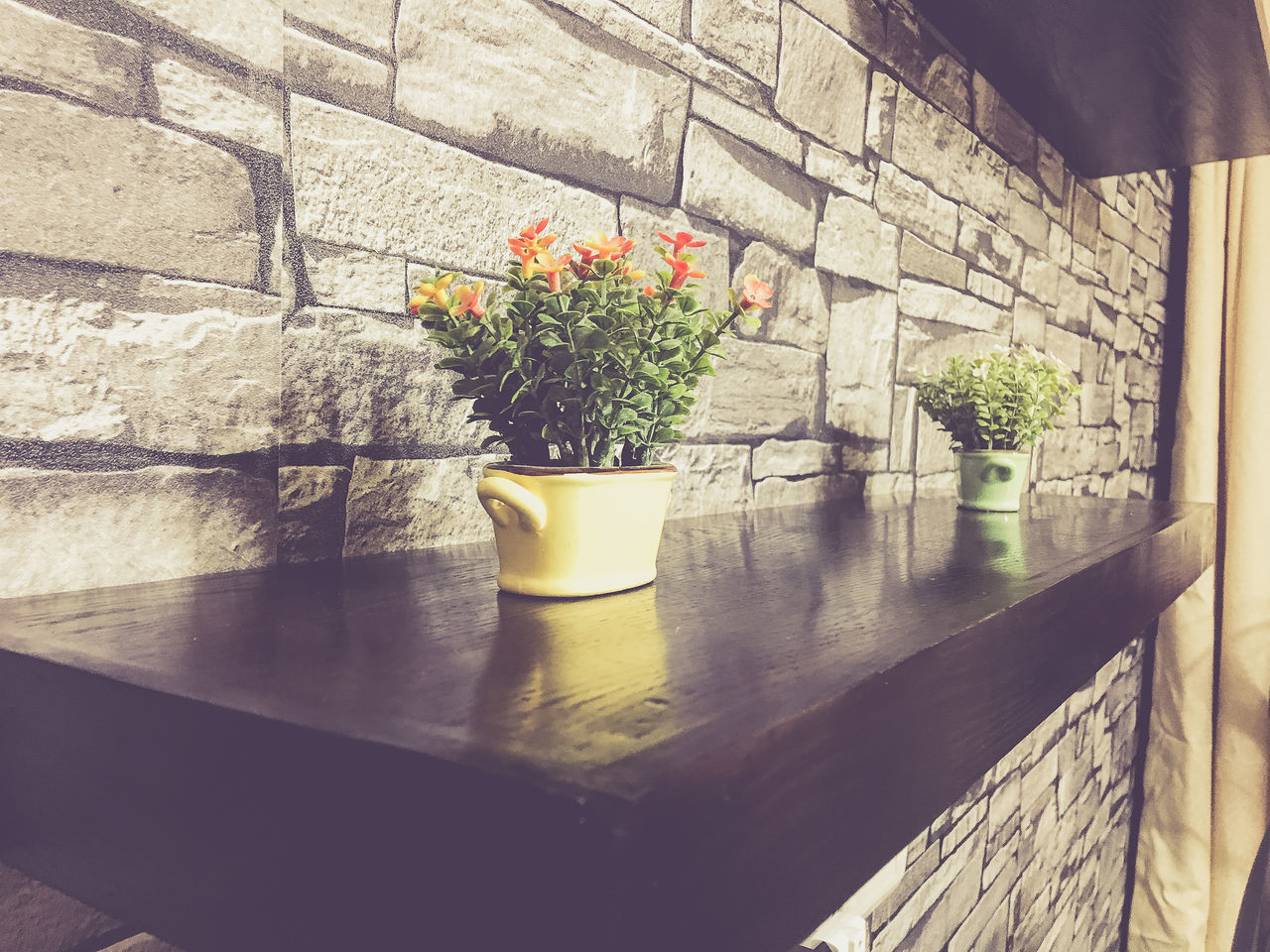 potted plant, plant, growth, table, architecture, indoors, no people, day, built structure, nature, flower, building exterior, beauty in nature