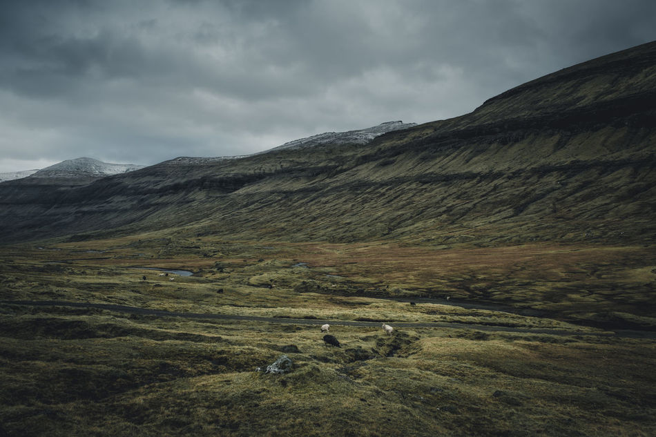 Landscape like in a fairytale. Location: Streymoy, Faroe Islands Equipment: Fujifilm X-T2 + XF14 F2.8 R Animal Beauty In Nature Cloud - Sky Day Faroe Islands Field Grass Grassland Green Landscape Landscapes Mountain Mountain Range Mystic Nature No People Outdoors Physical Geography Rough Scenics Sheep Sky Tranquil Scene Tranquility Wanderlust