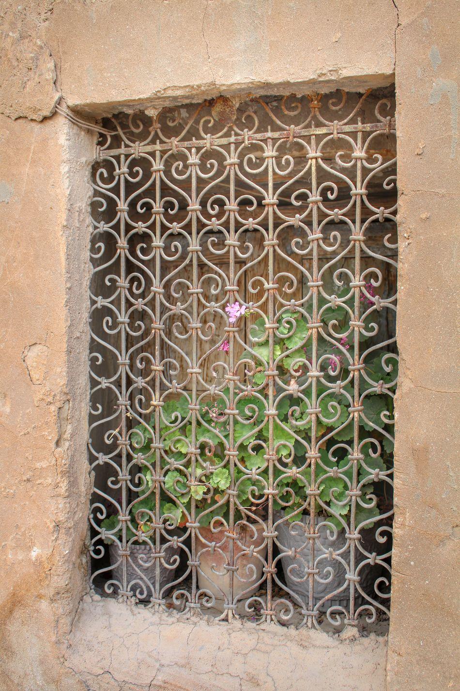 آزادی چیز مضحکی است، وقتی زیبایی را نیز از آن بی بهره ساختیم، با دستهایمان، همین دستهای معصوم.. Beauty In Nature Nature Majestic Scenics No People Plant From My Point Of View Shiraz, Iran Flowers Abstract Freedom HUMANITY Fine Art