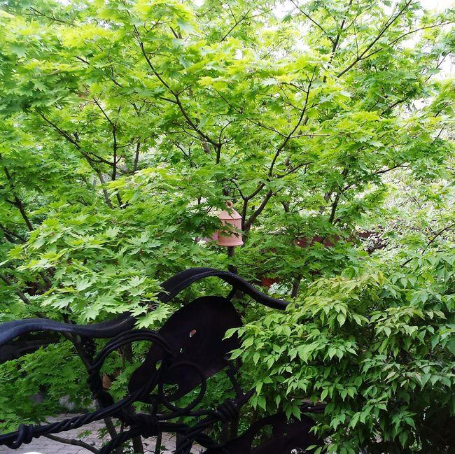 お店の窓から。Green Green Green!  Relaxing Hello World Happy Life