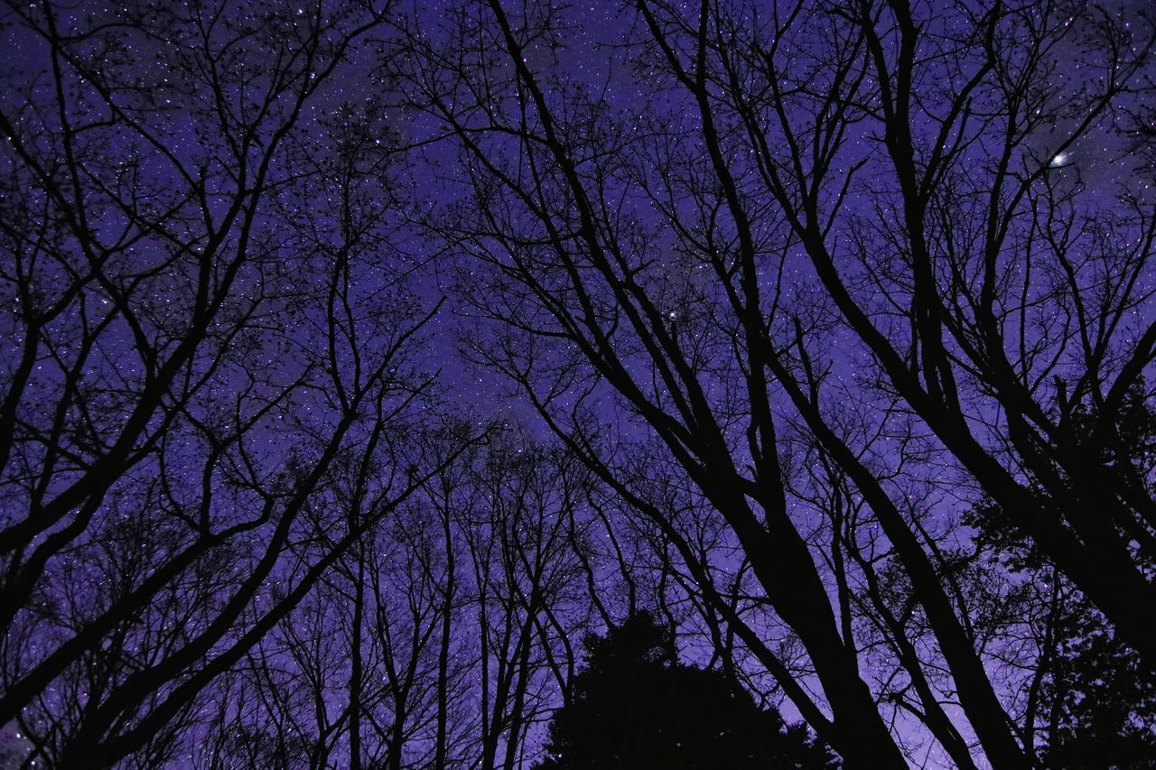 tree, nature, low angle view, beauty in nature, bare tree, branch, silhouette, tranquility, no people, outdoors, scenics, sky, night, astronomy