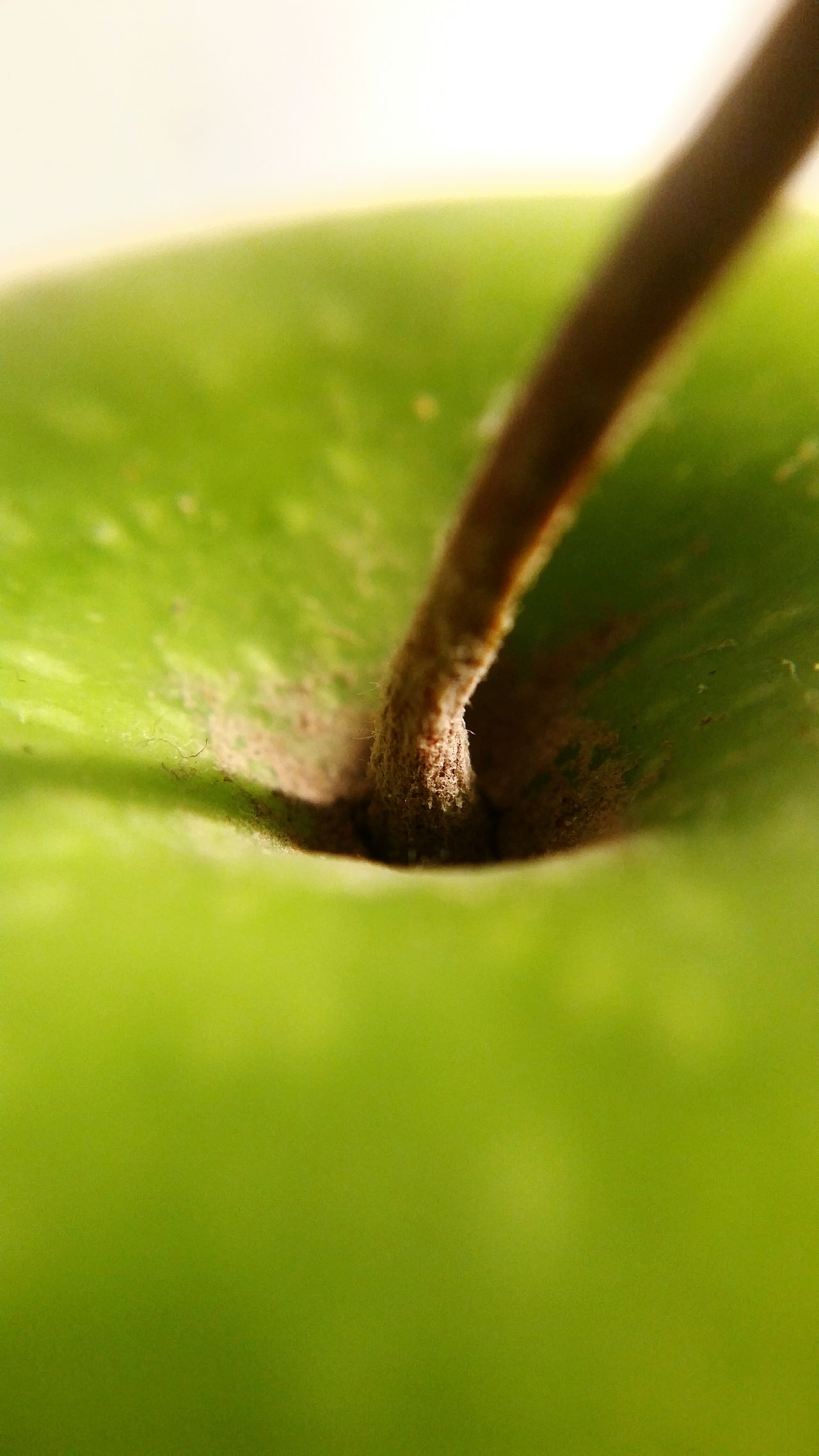 Close-up Nature Green Color Apple Shadows & Lights Macrofruitandveg Healthy Eating