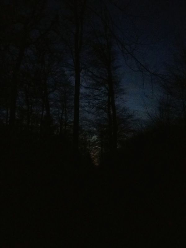 The forest at dusk. · Trees Spooky Trees Hugging a tree sunset Alone in the dark — in Varel, Germany